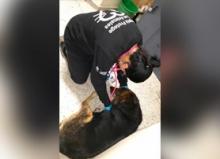 Adoptar perros boletín