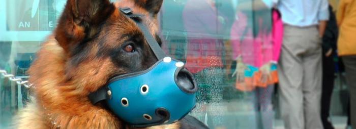 El equipo canino de TransMilenio